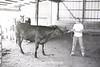 1979 4H 16 4H livestock 254