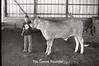 1979 4H 16 4H livestock 252