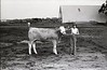 1979 4H 16 4H livestock 260