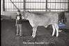 1979 4H 16 4H livestock 253