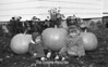 1970 Sheet 3 Big Pumpkins g114