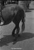 1970 sheet 62 horse 826