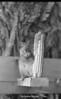 1970 sheet 39 squirrel w corn 785
