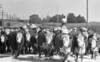 1973 sheet 43 cattle drive 481