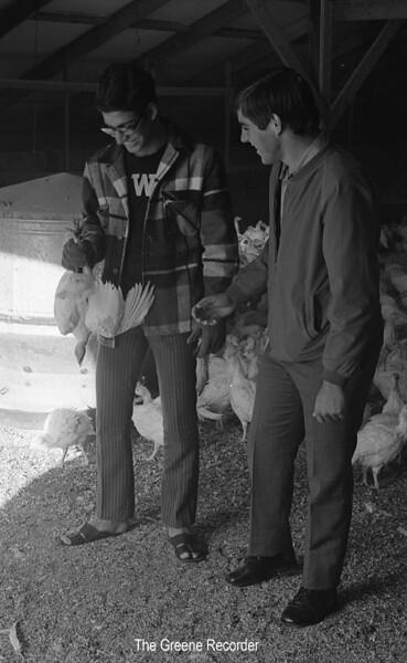1973 sheet 31 turkeys 502