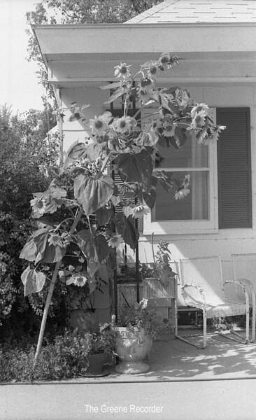 1973 sheet 40 Sunflower 973