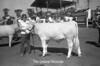 1974 4H at Fair sht 51035