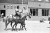 1975 River Days Parade Horse w Colt 095