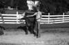 1978 4H calf sheet 112 423