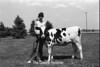 1978 4H Livestock sht 38 453