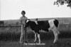 1978 4H Livestock sht 38 471