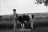 1978 4H Livestock sht 38 472