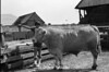 1978 4H Livestock sht 38 458