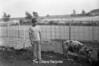 1978 4H Livestock sht 38 473