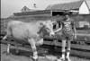 1978 4H Livestock sht 38 461