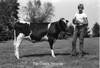 1978 4H Livestock sht 38 451