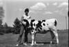 1978 4H Livestock sht 38 454