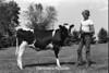 1978 4H Livestock sht 38 452