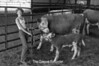 1981 4H animals n pets 983