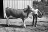 1981 4H animals n pets 986
