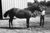 1981 4H animals n pets 977