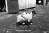 1981 4H animals n pets 981