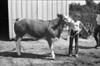1981 4H animals n pets 985