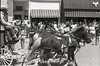 UK 11 parade horse 497