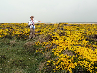 Stef and Gorse