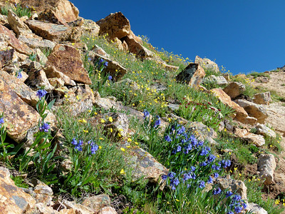 Wildflowers on the way up that steep headwall