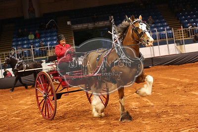 Old Home Week Draft Horse Show 2016