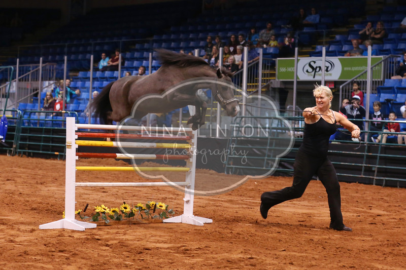 Old Home Week Miniature Horse Show 2016