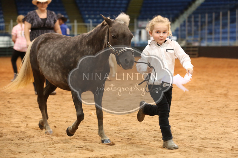 Old Home Week Miniature Horse Show 2017