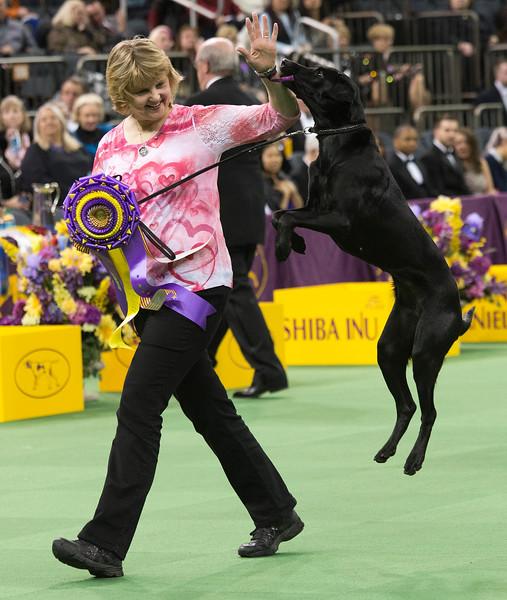 APTOPIX Dog Show Obedience