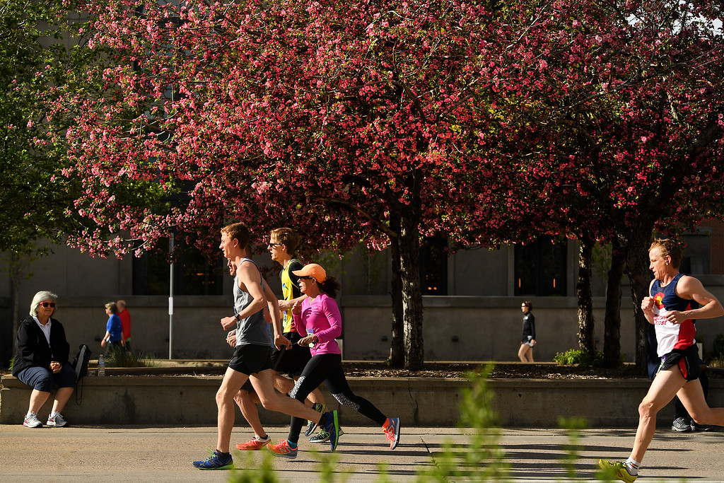 . DENVER, CO - APRIL 24:  Hundreds of runners, framed by flowering crab apple blossoms, make their way towards the finish line along East First Ave during the 34th annual Cherry Creek Sneak road races on April 24, 2016 in Denver, Colorado. The day\'s races included a 10 miler, a 1.5 mile Sneak Sprint, a 5K and a 5 mile run and walk.   (Photo by Helen H. Richardson/The Denver Post)