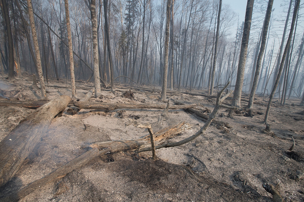 . Trees charred by a wildfire continue to smolder along along Highway 63  on May 6, 2016 in Fort McMurray, Alberta, Canada Wildfires, which are still burning out of control, have forced the evacuation of more than 80,000 residents from the town.  (Photo by Scott Olson/Getty Images)