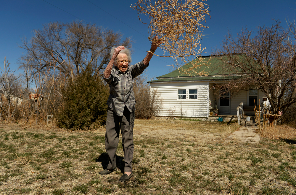 """. KARVAL, CO - MARCH 31: Alice Webb, 97, tosses tumbleweeds from her front yard in Karval, Monday, March 31, 2014. \""""I\'ve lived through the Great Depression, the drought in the 1950s, but nothing compares to what I\'m seeing now,\"""" said Webb.  (Photo by RJ Sangosti/The Denver Post)"""