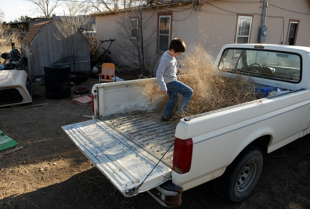 . SPRINGFIELD, CO - MARCH 31: Josh Bickford, 9, piles tumbleweeds into the back of his father\'s truck as he cleans up his families yard in Springfield, Monday, March 31, 2014. Bickford\'s father will take tumbleweeds to the landfill. (Photo by RJ Sangosti/The Denver Post)