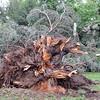 TREES_SN0996