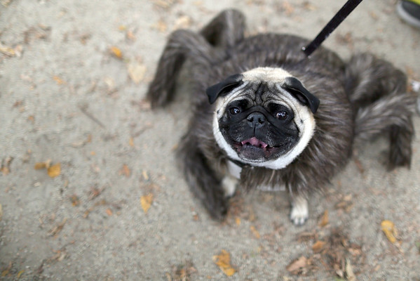 2015-10-24 25th Annual Tompkins Square Halloween Dog Parade