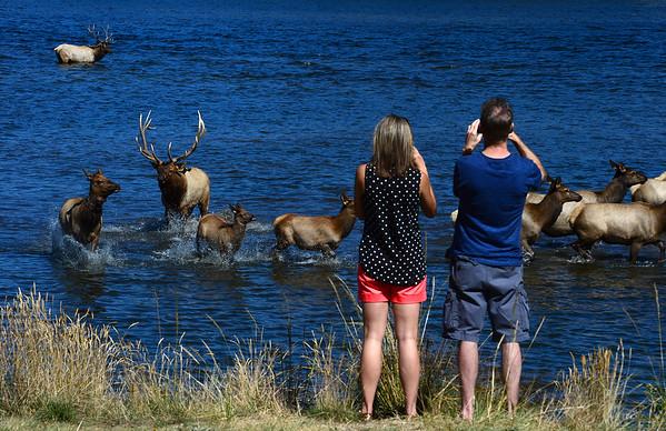 2014-09-26 Elk at Estes Lake