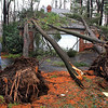 Charles Winternheimer, 82, and his dog, Dudley, appraise the damage from several tall trees that fell on his house early Wednesday Jan. 30, 2013,   during a winter wind and rain storm. Winternheimer lives in the Royal Pine area where many trees where downed during the storm. (Frank Espich/The Star)