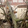 A tree split through this trailer on Wednesday, Jan. 30, 2013, in Galatia, Ill. A severe storm ripped through a small part of the Saline County town late Tuesday evening. (AP Photo/The Southern Illinoisan, Paul Newton)