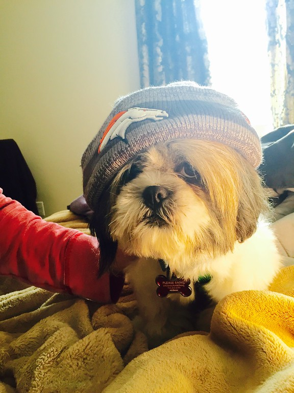 . Jackpot the Shihtzu is a fan- ready to rock and roll with his his game face on! (Submitted by Shoshauna Clark)