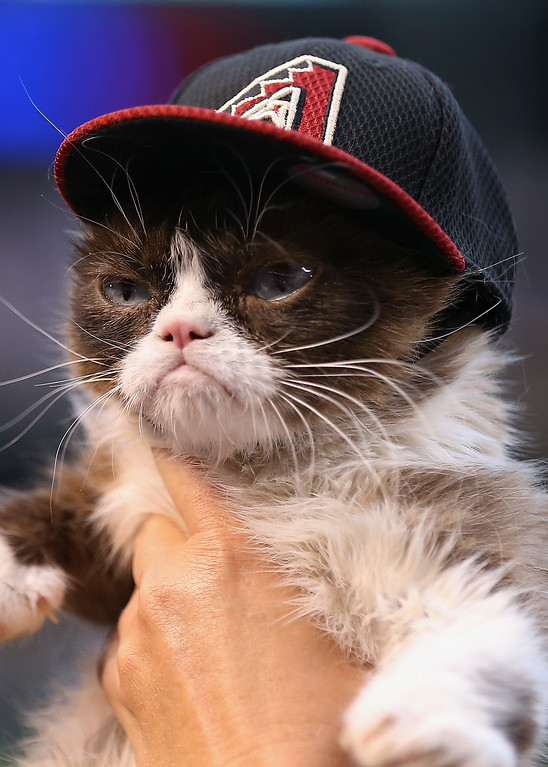 . PHOENIX, AZ - APRIL 04:  \'Grumpy Cat\' on the field before the MLB opening day game between the Colorado Rockies and the Arizona Diamondbacks at Chase Field on April 4, 2016 in Phoenix, Arizona.  (Photo by Christian Petersen/Getty Images)