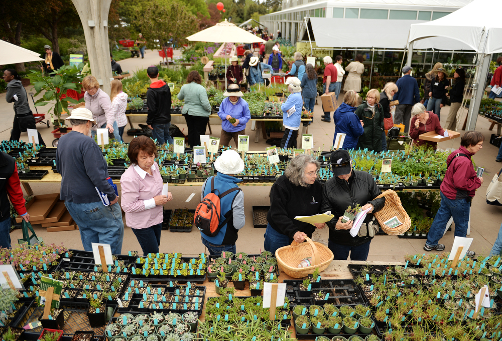 . People crowd into the Denver Botanic Gardens for the annual spring plant sale, May 09, 2014. The sale will go through Saturday. (Photo by RJ Sangosti/The Denver Post)
