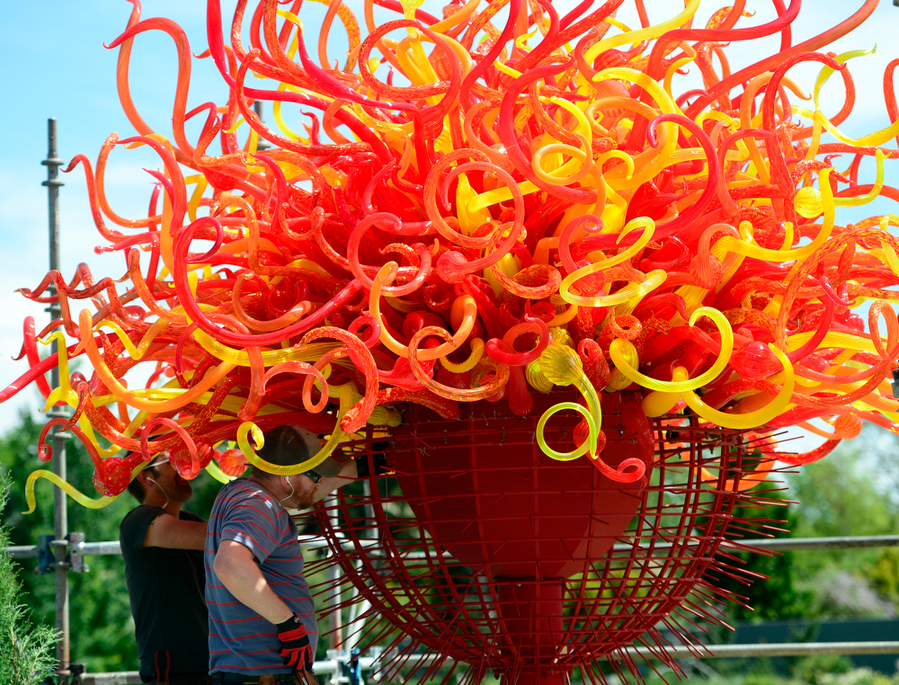 . Members from the Chihuly studio team carefully place the pieces for Summer Sun. The Denver Botanic Gardens continues preparations for the opening of the outdoor exhibition of artwork by artist Dale Chihuly. Chihuly\'s design and installation team from Seattle, Wash. are on hand this week at the Gardens, installing the glass sculptures ranging in size, form, and color across the 24-acre property. The exhibit officially opens to the public on June 14, 2014 and runs through November 30. (Photo by Kathryn Scott Osler/The Denver Post)