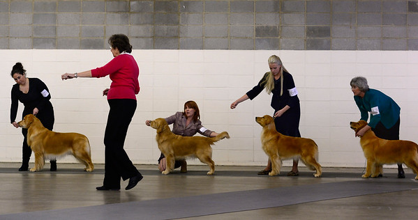 2016-02-12 The Rocky Mountain Cluster All Breed Dog Show