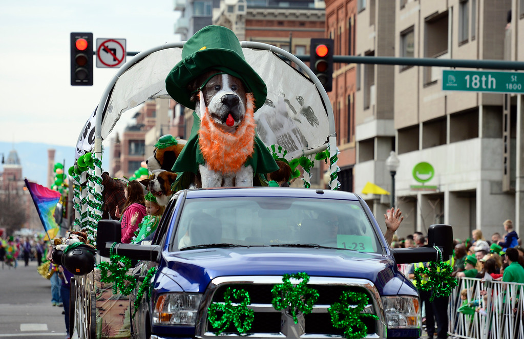 . The Colorado Saint Bernard Rescue float is a crowd-pleaser as the 2016 Denver St. Patrick\'s Day Parade makes its way down Blake Street in downtown Denver on Saturday, March 12, 2016. (Photo by Kathryn Scott Osler/The Denver Post)