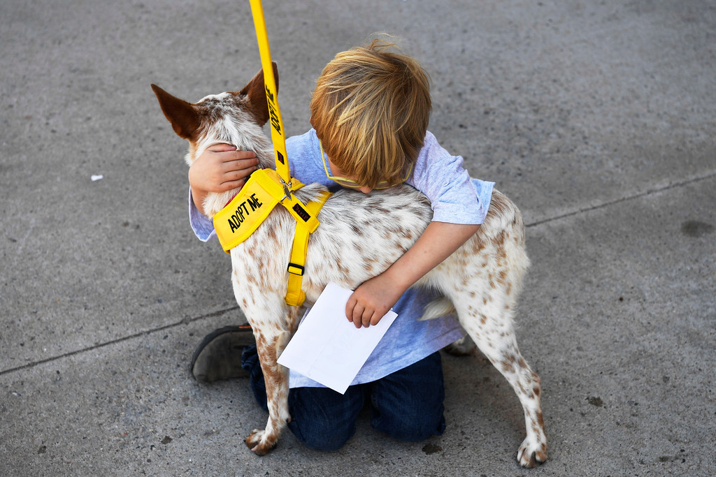 . Conner Grubb, 4, hugs rescue dog �Lindsay,� an Australian cattle dog inside the TAC Air hanger May 04, 2016.  (Photo by Andy Cross/The Denver Post)